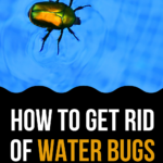 4 Ways To Get Rid Of Water Bugs In Your Pool