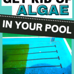 Easy Way to Get Rid of Algae in a Swimming Pool this Summer. Best Algaecides for Above Ground Pool